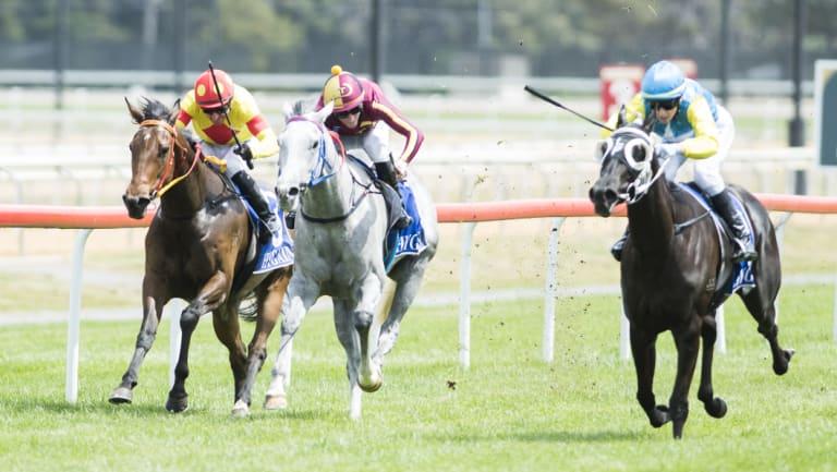 Apprentice jockey Courtney Gravener wins race six aboard Woollahra Lass at Thoroughbred Park on Tuesday.