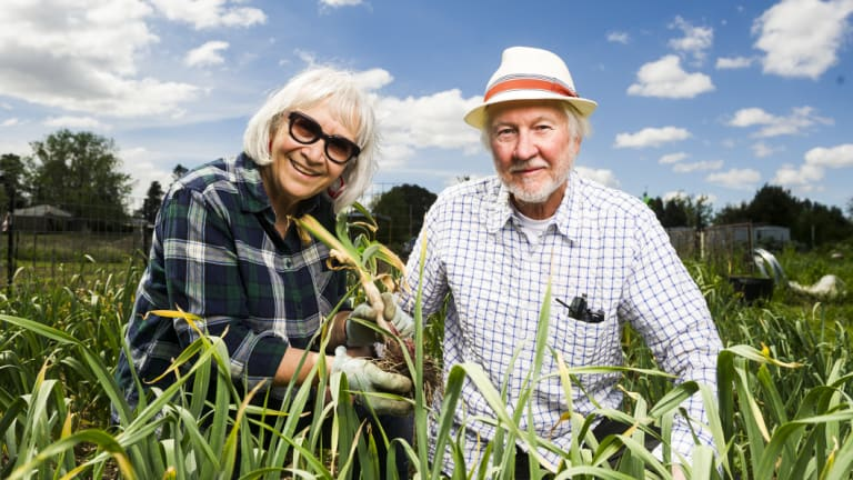 Bob Hefner and Peggy Daroesman with the fresh garlic.