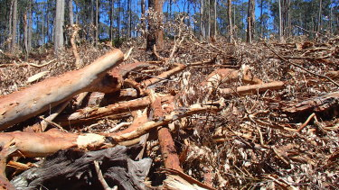 Debris the Forestry Corporation of NSW has left behind from its logging operations near Batemans Bay. Residents fear the area will explode like a tinderbox and put coastal towns under threat.