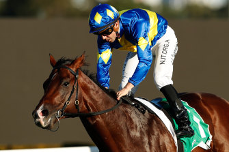Adam Hyeronimus lets down on Dawn Passage after scoring in the Hawkesbury Guineas at Rosehill.