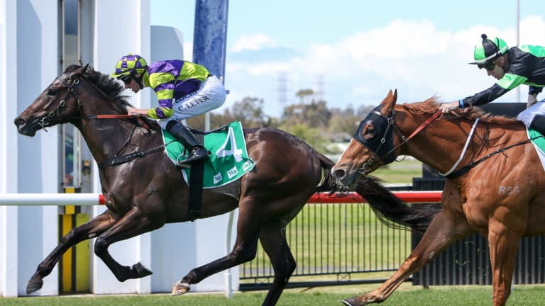 Open: there are plenty of chances on a seven-race card at Kembla.