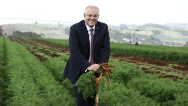 Prime Minister Scott Morrison pulls carrots at a farm near Forth in north-west Tasmania on Wednesday.