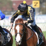 No rush as Portelli stakes his claim with Nicci's Gold