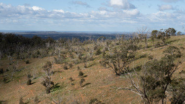 Nardoo Hills, in northern Victoria.