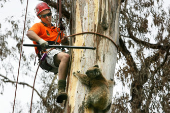 One that got away ... wildlife rescue resources have been stretched by the early fire season.