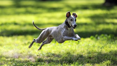 """The government is delivering more than 20 new """"pocket parks"""" and off-leash dog parks."""