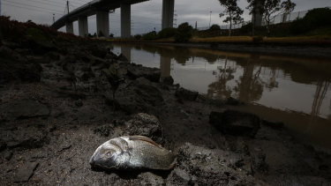 The EPA have warned people to stay away from Stony Creek.