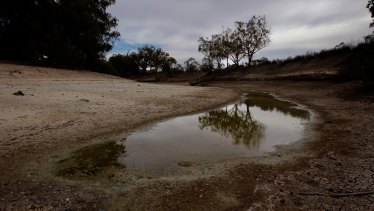 When the river runs dry: the once-mighty Darling River is a just puddle.