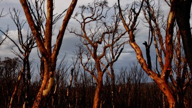 The Gospers Mountain Fire destroyed 512,000 hectares of bushland.