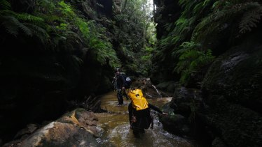 A summer of fires and floods has created difficulties for Blue Mountains' tour operators.