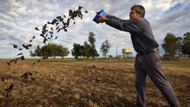 Coonamble broadacre farmer Allan Inglis cleaning out his mouse traps.