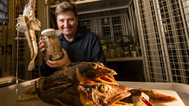 Dr Tim O'Hara with specimens from the museum's collection. In the jar is a brittle star.