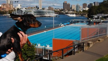 The idea to open the pool to dogs was first floated by a group of Potts Point pet owners.