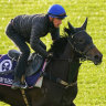 Verry Elleegant and Finche please Waller camp with pre-Cup work