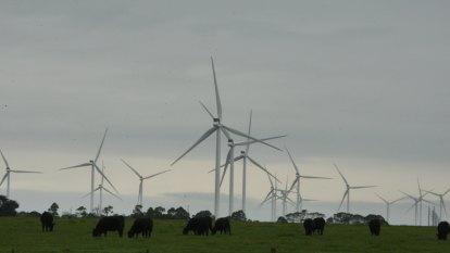 Award-winning sheep farmers sue AGL over wind farm construction