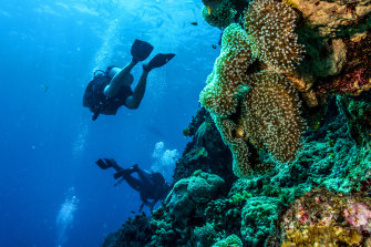 The United Nations' heritage organisation, UNESCO, has warned the Great Barrier Reef is in danger.