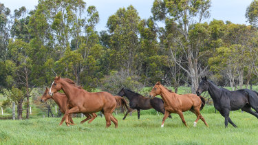 Thoroughbred Breeders Australia wants an audit of Racing Australia's official retirement data.
