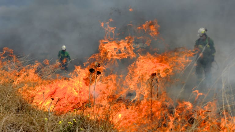 Conservation field officer Andrew Foudoulis attributes regular, controlled burns with the return of rare native plants and reduction in the use of herbicides.