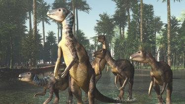 An artist's impression of a Weewarrasauras Pobeni.