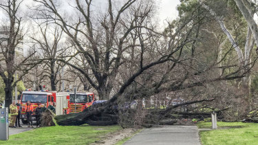 Emergency workers on the scene atPrinces Parkin Parkville where a tree fell, fatally crushing a Reservoir woman.