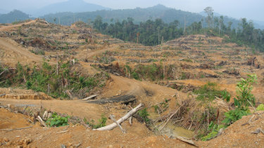 Forest cleared for a palm oil plantation inside the Leuser Ecosystem near Kuala Simpang in Indonesia's Aceh province, March 2014.