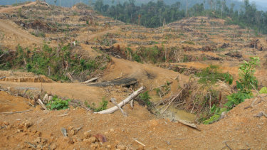 Forest cleared for an oil palm plantation inside the Leuser Ecosystem in Indonesia's Aceh province in 2014.