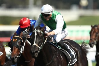 Randwick's traditional summer feature looks to be Bobbing's time to shine.