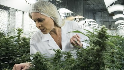 South West cannabis grower gets green light for bigger facility