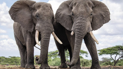 Anti-poaching efforts pay off as elephant numbers double