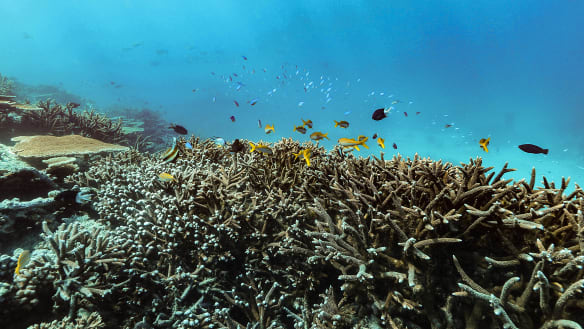 Mass coral bleaching forces review of reef protection plan