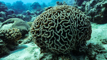 Great Barrier Reef tour operators will struggle to attract visitors to bleached corals, as happened twice in two years in 2016 and 2016, killing about half the corals.