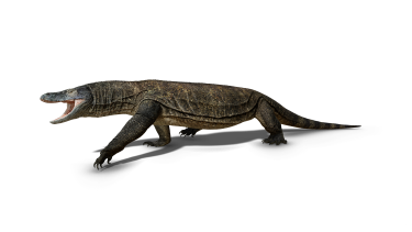 An artist's impression of Megalania, a huge goanna that lived until about 40,000 years ago.