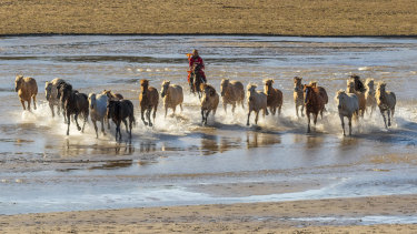 A Mongolian horseman performs horse-taming for Chinese tourists on the Wulan Butong grasslands.