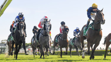 Glen Boss, in the checked cap, looks across to the winner, Master Of Wine, in the concluding stages of the Tattersals Cup at Randwick.