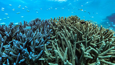 The Great Barrier Reef has already undergone severe damage due to back-to-back bleaching events caused by climate change.