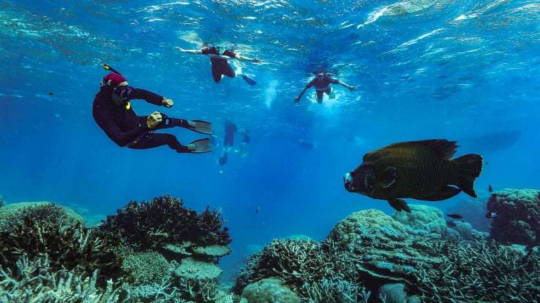 The government understands the Great Barrier Reef will not survive in its current form.