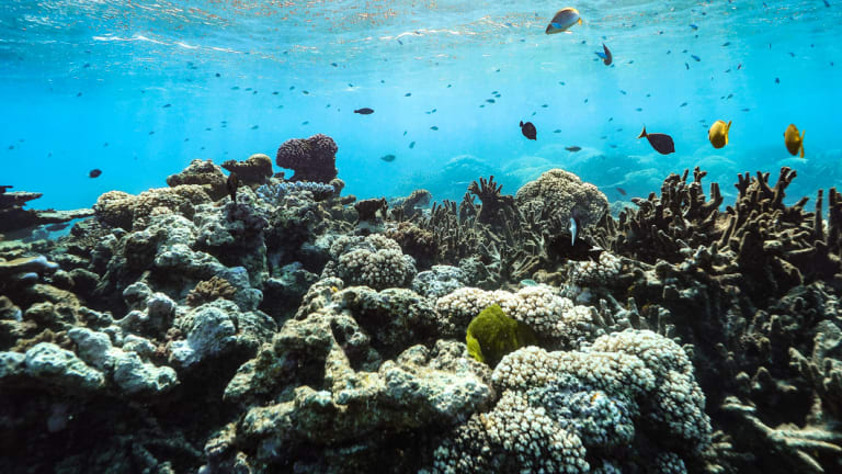 The Great Barrier reef off Port Douglas.