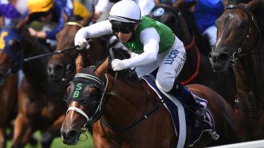 Narrandera will host nine races on Sunday.