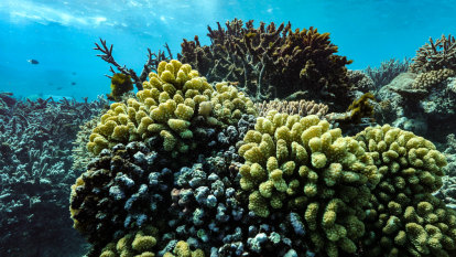 Reef grief: Some tourists already mourning loss of Great Barrier Reef