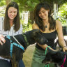 'Nice to give them a home': ACT Rescue and Foster rehomes 3000th dog