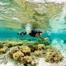 'Remarkable' coral recovery on southern Great Barrier Reef island