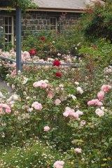 The Alister Clark Memorial Garden in Bulla, Victoria