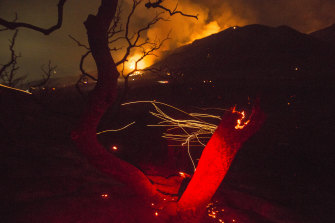 The wind whips embers from a tree burned by a wildfire Yucaipa in California. A brutal heat wave pushed temperatures into triple digits in many parts of state.
