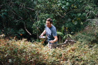 Eddie Brook foraging in the rainforest at Cape Byron.