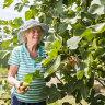 Kitchen Garden: Neighbourly love for fresh produce