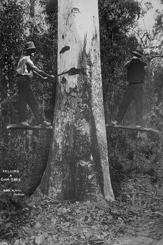 """Felling a Gumtree"", Kerry and Co, Sydney, Australia, c. 1884-1917"
