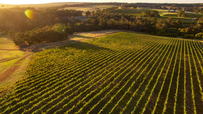 Grape expectations? Big-name WA wineries lose fight to 'split' from Margaret River