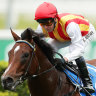 Peltzer will put his unbeaten record at Randwick on the line in the Bondi Stakes on Saturday