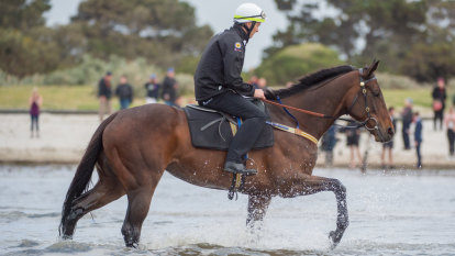 Winx owners sure she could have won The Everest or Melbourne Cup