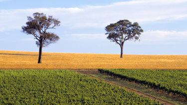 A vineyard near Mount Barker in the lower Great Southern region, WA.